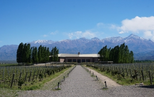 vineyard-mendoza